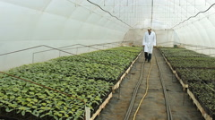 Stock Video Footage of Agronomist, nursery in greenhouse 2