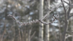 4k Close Up Tree Branch Covered With Ice and Snow Flakes Hand Held Stock Footage