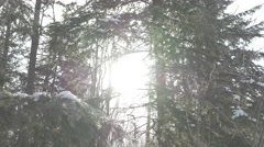 4K Snow Falling In Forest Sun Centre Frame Cold Icy Winter Lens Flare Stock Footage