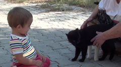Small boy meets cats and learns to stroke them Stock Footage