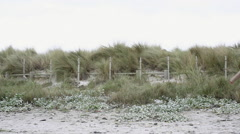 Woman walking along beach Stock Footage