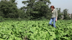 Young woman walking through crops in field Stock Footage