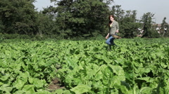 Young woman walking through field and picking crops Stock Footage