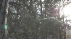 4K Trees Forest Snow Falling Icy Cold Winter Sunlight Lens Flare Stock Footage