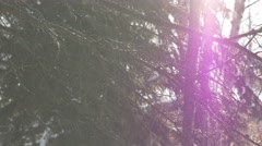 4k Close Up Tree Branches Falling Snow With Purple Lens Flare To Side Of Frame Stock Footage