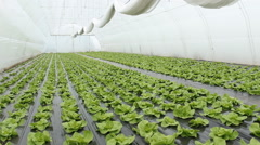 Agronomist in greenhouse  Stock Footage