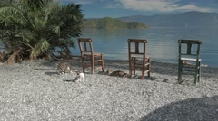 Wooden chairs with panoramic view at a lake and cats playing in a sunny day. 4k Stock Footage