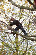 Tree surgeon trimming a tree - stock photo