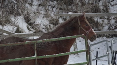 Bored Lonely Horse Enduring Snow Storm Standing Stock Footage