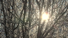 Brilliant Sun Star Splashing Behind Icy Branches Floating Serene Stock Footage