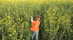 Stock Video Footage of Funny child hiding in big rape flower field, playing in nature