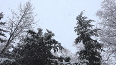 Heavy Snowfall In Forest Stock Footage