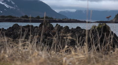Ocean Grasses and Rocky Coast Line - stock footage