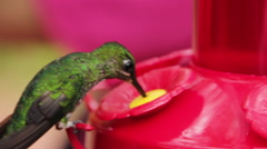Hummingbirds Eat from Feeder Stock Footage