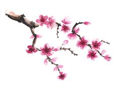 Hand-drawn branch of sakura Stock Illustration