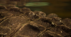Prehistoric looking skin of Alligator under water 4k Stock Footage
