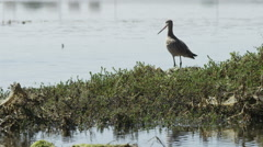 Wetland Bird Flying Away 4K Stock Footage