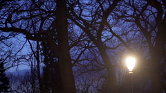 Street lamp lit evening in the park with trees and blue sky-timelapse Stock Footage