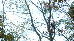 Man Working With Chain Saw In Tree Removal Stock Footage