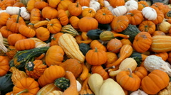 Pumpkins and gourds piled up at farmer's market Stock Footage
