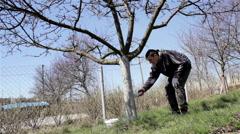 Gardener whitewash tree in the garden Stock Footage