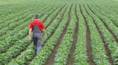 Agriculture, farmer in soy bean field Stock Footage