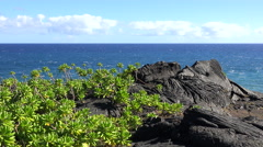 Barren lava rock landscape with green plant - blue sky and ocean background - stock footage