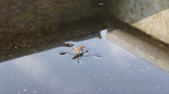Flying Insect Sat On Water In Farm Troth - stock footage