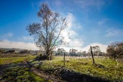 rural landscape with road through agricultural meadow in fog - stock photo