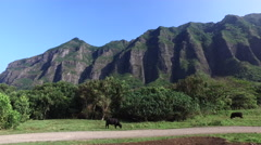 Mountains of Hawaii - Oahu, Kaneohe, Kaaawa valley, Kualoa ranch, film location - stock footage
