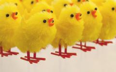 Abundance of easter chicks, selective focus - stock photo