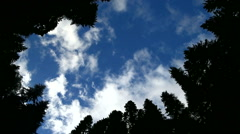 Upward view of trees silhouetted against the sky as clouds move by. - stock footage