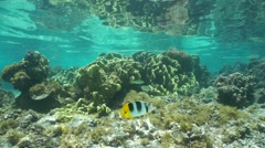 Coral and tropical fish French Polynesia - stock footage