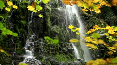 View through Fall Colored Leaves to Mossy Waterfall Stock Footage