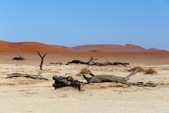 Hidden Vlei in Namib desert - stock photo