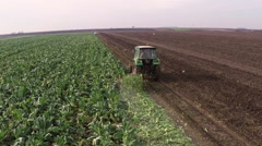 Cauliflower field during land cultivation. Aerial footage. Stock Footage