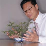 Businessman trimming bonsai tree - stock photo