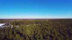 Aerial footage. Pine trees. Winter landscape. Sunny day. Winter forest - stock footage