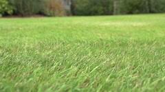 Perfect Turf In English Garden - stock footage
