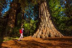 Woman with rucksack near tree, Redwood California Stock Photos