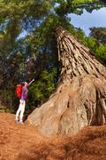 Pointing girl near big tree in Redwood California Stock Photos
