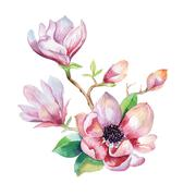 Painting Magnolia flower wallpaper. Hand drawn Watercolor floral - stock illustration