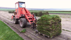 Grass turf transport during machine cutting. Stock Footage