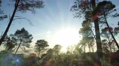4K, Sun through trees Stock Footage