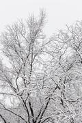Snowfall in the Trees Stock Photos