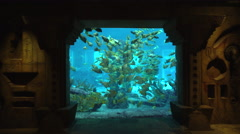 Atlantis Resort aquarium window - Nassau, Bahamas - stock footage