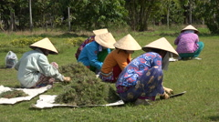 Traditional Vietnamese clothing, workers cut grass in a park, public garden Stock Footage