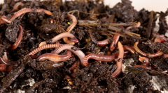 Red worms. Stock Footage