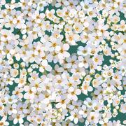 Seamless background of blossoming apple tree flowers Stock Illustration