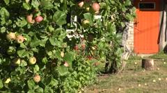 Apple tree fruits door Stock Footage